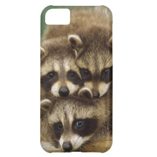 Cute Baby Raccoon iPhone 5C Cover