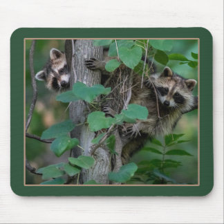 Cute Baby Raccoons Mouse Pad