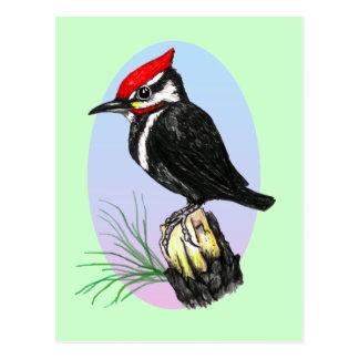 Cute Baby Woodpecker Postcard
