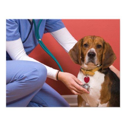 Cute Beagle Dog Getting a Veterinary Checkup Personalized Invites