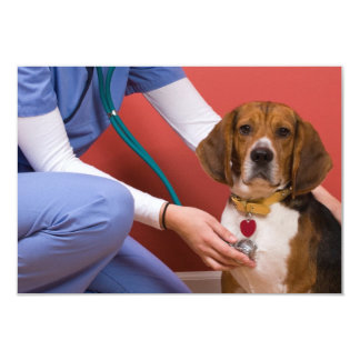 "Cute Beagle Dog Getting a Veterinary Checkup 3.5"" X 5"" Invitation Card"