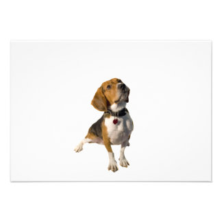 Cute Beagle Dog Custom Invitations
