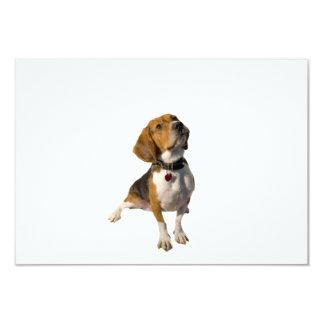 "Cute Beagle Dog 3.5"" X 5"" Invitation Card"