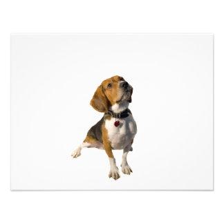 Cute Beagle Dog Invites