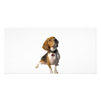 Cute Beagle Dog Photo Card Template