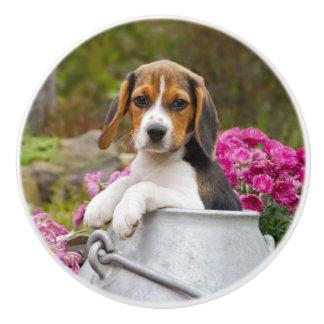 Cute Beagle Dog Puppy in a Milk Churn - Decorative Ceramic Knob