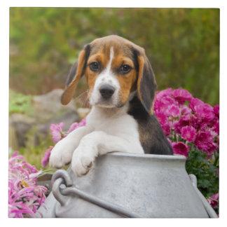 Cute Beagle Dog Puppy Milk Churn - Quadrat Ceramic Tile