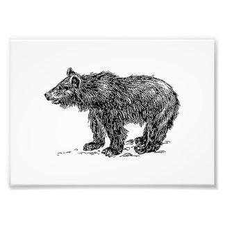 Cute Bear Cub Photograph