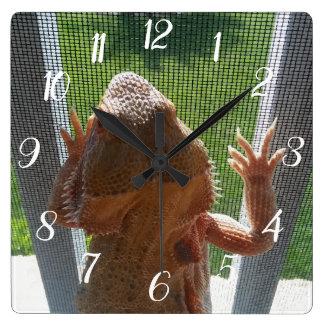 Cute Bearded Dragon Climbing Lanai Screen Picture Square Wall Clock