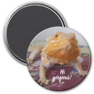 Cute Bearded Dragon Picture Magnet