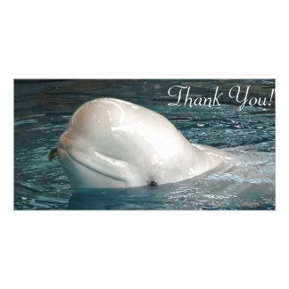Cute Beluga whale Sticks Face Out of Pool Card