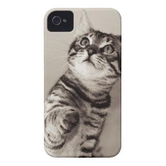 Cute Bengal Kitten Case-Mate iPhone 4 Case