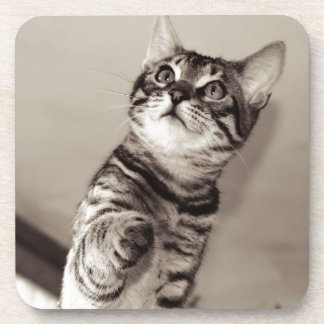 Cute Bengal Kitten Coaster