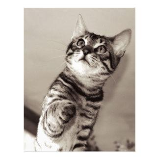 Cute Bengal Kitten Letterhead