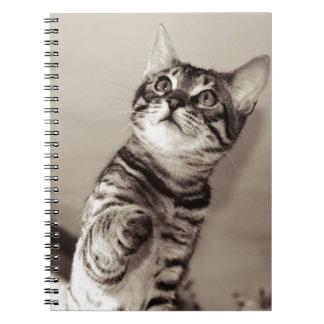 Cute Bengal Kitten Notebooks