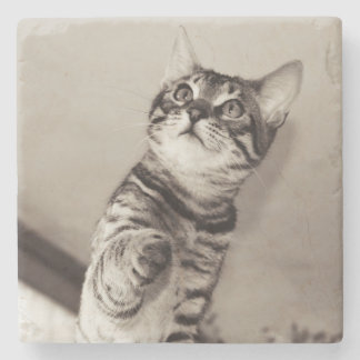 Cute Bengal Kitten Photo Stone Coaster