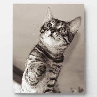 Cute Bengal Kitten Plaque