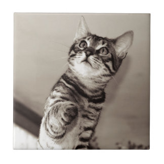 Cute Bengal Kitten Tile