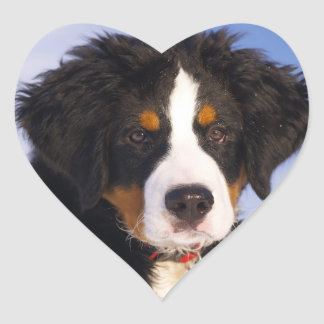 Cute Bernese Mountain Dog Puppy Picture Heart Sticker