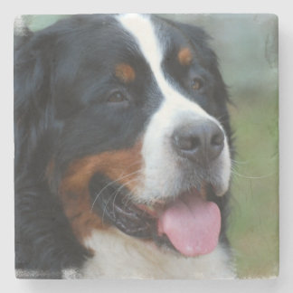 Cute Bernese Mountain Dog Stone Coaster
