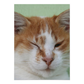 Cute Bi Color Cat Winking Custom Invitation