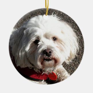 Cute bichon frise dog round ceramic ornament