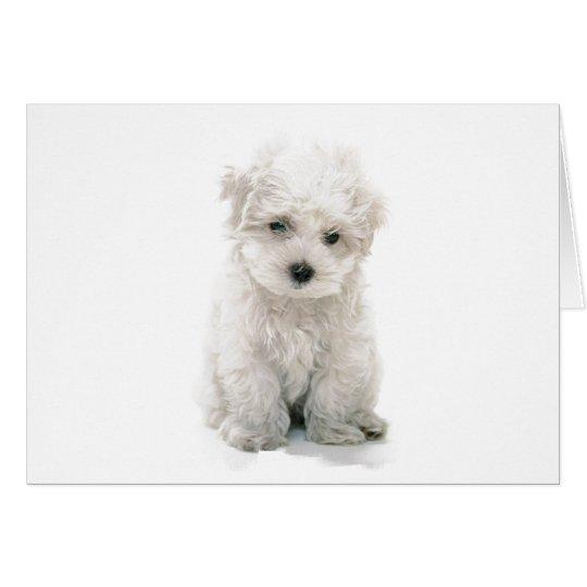Cute Bichon Frise Greeting Card