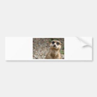 Cute Big-Eyed Meerkat Bumper Sticker