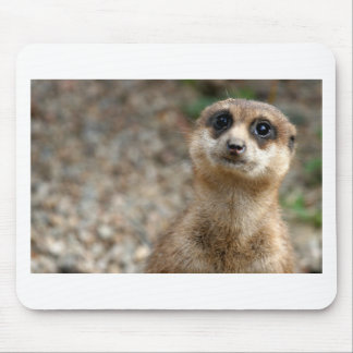 Cute Big-Eyed Meerkat Mouse Pad