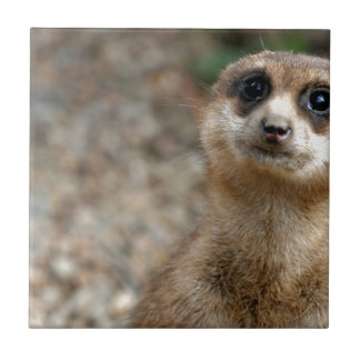 Cute Big-Eyed Meerkat Tile