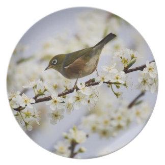 Cute Bird and Cherry Blossom Dinner Plates