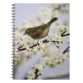 Cute Bird and Cherry Blossom Notebooks