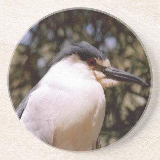 Cute Bird Coasters