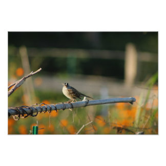 cute bird looking- beautiful nature and animal poster