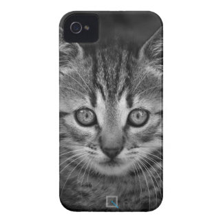 Cute black and white cat, iPhone 4 Case