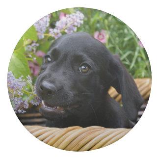 Cute Black Labrador Retriever Dog Puppy Pet Photo Eraser