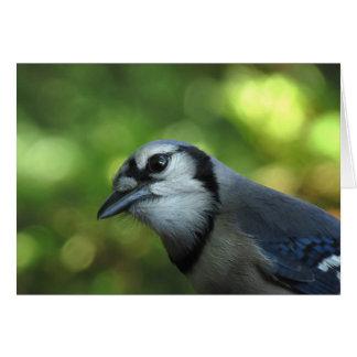 Cute Bluejay Bird Greeting Card Template