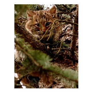 Cute Bobcat Kitten in a Tree Postcard