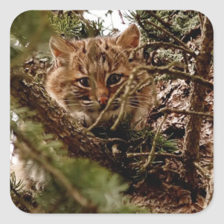 Cute Bobcat Kitten in a Tree Square Sticker