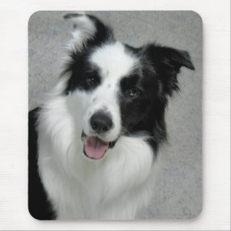 Cute Border Collie Photo Portrait Mouse Pad