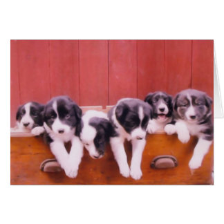 Cute Border Collie Puppies Animal Card
