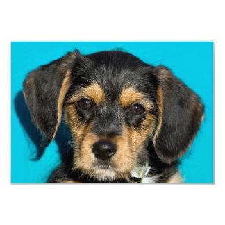 "Cute Borkie Puppy 3.5"" X 5"" Invitation Card"