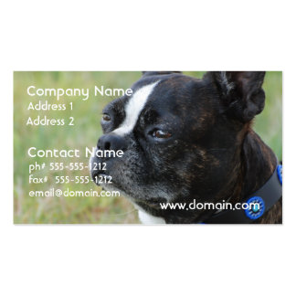 Cute Boston Terrier Business Cards