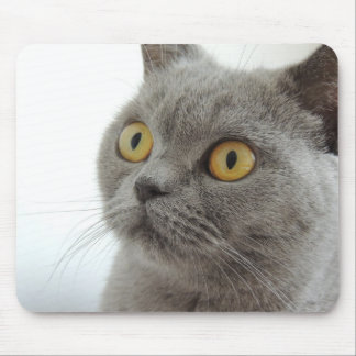 Cute British Shorthair cat Mouse Pad