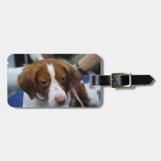 Cute Brittany Spaniel Luggage Tag