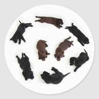 Cute Brown Black Labrador Retrievers Dogs Stickers