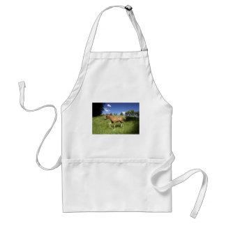 Cute brown foal standard apron