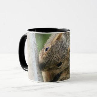 Cute brown squirrel mug -beautiful animal &nature