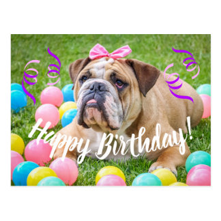 Cute Bulldog Happy Birthday Postcard