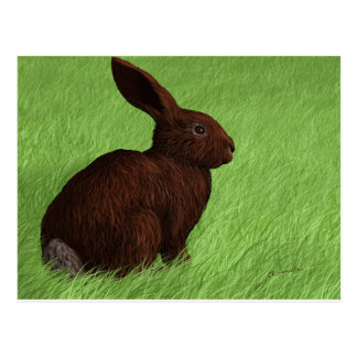 Cute Bunny on Alert in the Grass Postcard